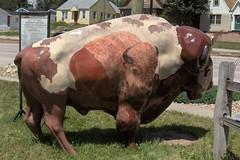 Painted Buffalo (Ms. Kathleen) Tags: mountains southdakota blackhills rural buffalo deadwood custer paintedbuffalo