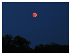 Under a Blood Red Moon (BayRoadPhoto/Laura) Tags: moon laura canon newengland moonrise bayroad canonpowershota620 bayroadphoto