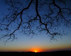 reach out and touch the sun (joaobambu) Tags: blue sunset pordosol sky sun tree topf25 silhouette topv111 azul backlight contraluz skyscape topf50 topv555 topv333 branch branches horizon topc50 stock himmel cu cielo topv777 backlit blau polarizer polarized leafless ceu pro1 hoya azurro