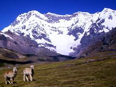 Origin of Peru