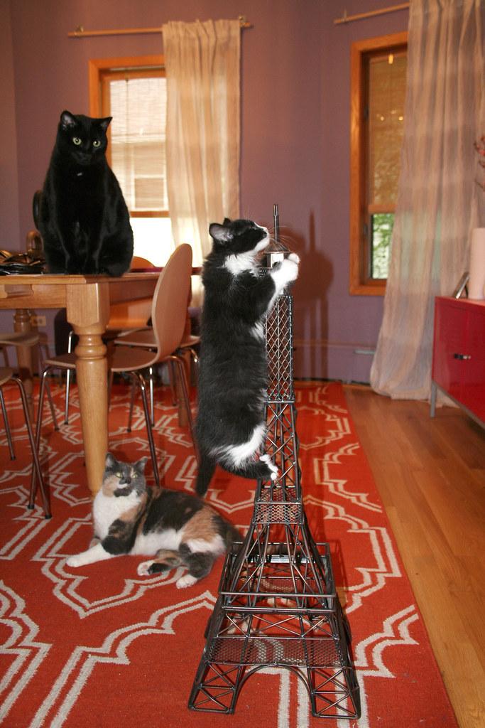 eiffel-cats