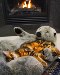 Mowgli's turn in the otter (Belltown) Tags: cats fire otter trust hearth bengals comfort donotdisturb goodlife i500