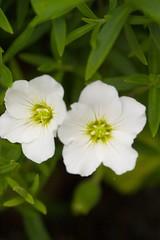 Green Tea (Airchinapilot) Tags: flower closeup canon 10d macros 3t closeuplens 100300l nikonno3t