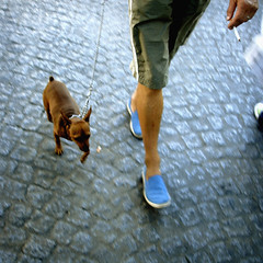 106599 (CHEN_Zheng) Tags: street dog paris color feet walking leg streetphoto ruili animalife