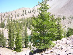 Pines and Crags Lake (fort-m) Tags: crags lassen