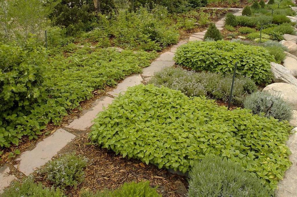 sprn023 Herb garden, wide