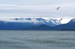 Homer Spit (kotobuki711) Tags: travel summer vacation seagulls mountains beach water birds alaska bay explore homer specland