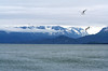 Homer Spit (kotobuki711) Tags: travel summer vacation seagulls mountains beach water birds alaska bay explore homer specland
