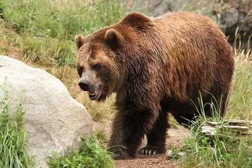 Mother's Bear