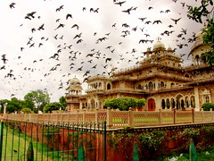 Byrds (Saad.Akhtar) Tags: india tourism birds museum temple fly jaipur rajasthan birla piegons birlatemple