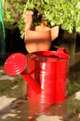 my new watering can! (michenv) Tags: birthday red plants slr water garden nikon d70 nikond70 michelle sunny australia pots digitalcamera dslr mygarden tamron nikondigital digitalslr wateringcan 庭 hothouse digitalphotography birthdaypresent 水 tamron90mm albury macrolens 赤 オーストラリア nikonslr tamronlens ニコン michenv プレセント マクロレンズ うちの庭 誕生日プレセント じょうろ タムロンレンズ