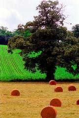 Al Bordo (Sergio Vollono) Tags: verde colours fiume erba giallo terra francia vacanza fieno mayenne sergiovollono wwwartelateraleit wwwsergiovollonophcom sergiovollonogmailcom
