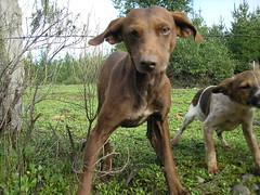 Perro Feliz (cespedesenelmaule) Tags: perro fotografa toconey
