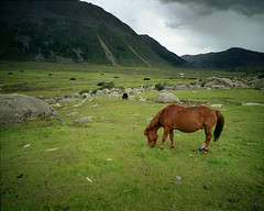horse and yurts (themexican) Tags: horse tibet 6x7 yurts approachingrain summerpasture wayoutthere