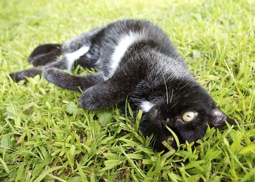 The Kitty on grass