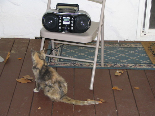 shebacat and the boombox