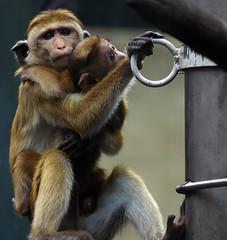 Monkey (C) 2006