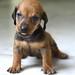 子犬:Precious