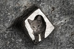 Real de Catorce Tour 42/50: Cat in the Stone. (CarlosBravo) Tags: old pet tourism cat mexico town pueblo kitty mexican gato carlosbravo realdecatorce tradiciones realde14 sanluispotosi bradpittjuliaroberts