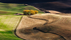 Ever-changing (John Westrock) Tags: garfield washington unitedstates us landscape nature farmfield rollinghills rural farm light shadows contrast pacificnorthwest canoneos5dmarkiii canonef100400mmf4556lisusm steptoebutte palouse