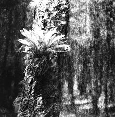 Multiversos (Felipe Cárdenas-Támara) Tags: rolleiflexautomat6x6modelk4a rolleiflexjune1951march1954 rolleiflextlr ilfordpanf50plus expiredfilm felipecárdenastámara felipecardenasphotography