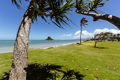 Palm Trees (nclcocco) Tags: ocean sky usa clouds canon island hawaii oahu july palmtrees greenery hi 2014 pacificislands kualoaregionalpark 5dmkiii canon5dmarkiii 5dmarkiii nclcocco nicolacocco