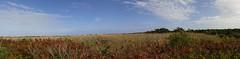 Hatches Harbor panoramic 2 (mahler9) Tags: panorama grass provincetown capecod september marsh wetland jaym 2015 hatchesharbor mahler9 lgg4