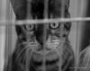 IMG_7751a_c (JANY FEDERICO GIOVANNINETTI) Tags: hairy cats cat hair eyes funny soft sweet expressions occhi international felini gatto gatti divertenti pelosi pelo dolci pedigree internazionale sguardi espressioni razza soffice soffici