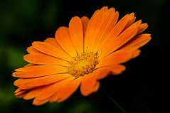 _DSC7632 (hermelin52) Tags: nature flora natur pflanze pflanzen blte nahaufnahme blten wildpflanzen