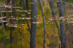 Mont Saint-Hilaire (Yannis Papageorgiou) Tags: autumn trees fall nature leaves reflections mont impressionistic sainthilaire