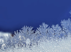 Eisblumen (pictorius73) Tags: winter kalt eisblumen vereist frostwork