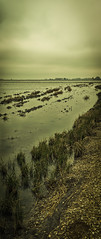 CLL020-141217-134517-1Dg.Baryta-Imp.jpg (Cristobal Llopis) Tags: paisajes lago cereales arroz charca marismas islamayor lasmarismas