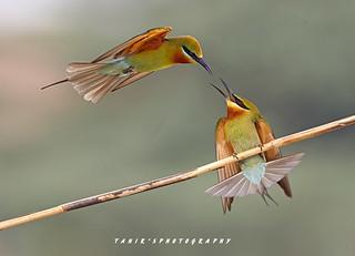Territory Fight