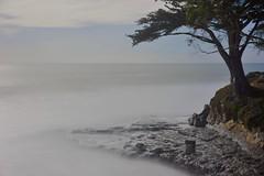 West Cliff Drive (clairehintze) Tags: ocean longexposure water rocks cypresstree westcliffdr nikond700