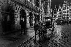 Ready for a ride (Ludo_Jacobs) Tags: horse night cheval abend cityhall strasse kutsche stadt avond rathaus pferd antwerpen stadhuis paard koets pferdekutsche koetsier paardenkoets