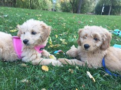 Liesel and Nolan's Ivy and Leo on a play date!