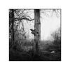 Tree in Acharting (cardijo) Tags: austria österreich salzburg tree baum landschaft landscape winter eis ice analog film rodinal rolleiflex carlzeiss tessar ilford fp4 6x6