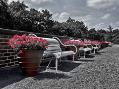 Benches B&W (Ajusenka) Tags: prague blackandwhite flowers benches lavičky praha kvety čiernobiela serene pokoj