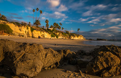 Remembering a California Christmas (tquist24) Tags: california lagunabeach nikon nikond5300 pacificocean beach cliff cliffs clouds geotagged goldenhour longexposure lowtide ocean palmtree palmtrees reflection rocks sand seascape sky tree trees unitedstates