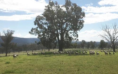 Bundarra NSW