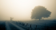 Into nothingness (Ir3nicus) Tags: nikond750 dslr germany deutschland geldern niederrhein outdoor fog tree countryside contrast tonedbw road fence landscape meadow boeckelt