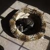 Snuggles (Lainey1) Tags: oz ozzy dog frenchie bulldog lainey1 elainedudzinski frogdog zendog frenchbulldog ozzythefrenchie leica leicadlux4 dlux4 lightshadow bed dogbed leopardpattern shadows morning