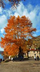 Λιμνη Καστοριας P1280173 (omirou56) Tags: λιμνηκαστοριασ 169ratio ελλαδα μακεδονια δεντρο ουρανοσ συννεφα panasoniclumixdmctz40 greece macedonia makedonia macedoniatimeless lake tree sky clouds