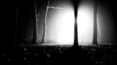 Into the Woods (wolfi8723) Tags: wood forest outdoor outside nature natur light bw beautifulexpression