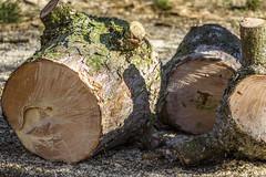 Firewood (dietmar-schwanitz) Tags: holz wood brennholz firewood baum tree kiefer pine schwarzkiefer garten garden sone sun schatten shadows farbe color colour braun brown nikond750 sigma 150500 mm f5063 apo hsm lightroom dietmarschwanitz