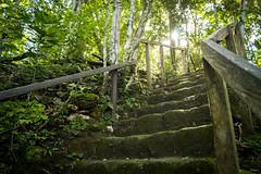 Lúz (sierramarcos14695) Tags: peten guatemala el mirador cuenca gradas antiguas antigua civilizacion explorando pais travel viaje nature naturaleza sony a58 luz rayos hojas atraves baranda verde arboles troncos piedra subida escalera