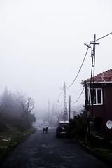 Road (cekic photography) Tags: istanbul landscape sis fog building road travel travelling urban rural street fujifilm winter weather european europe animal dog life faydalialetcekic turkey turkiye turkish lif skylines nature cloud wallpaper art photography photographers alone solitary melancholy cekicphotography erencevik vsco exploration instagram photographer monoart window architecture documentary pic