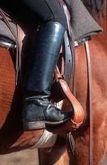 lzs7-2504 (lotharlenz) Tags: zirgs pferd paard lotharlenz konj horse hobu hestur hest häst equus cheval cavalo caballo steigbügel reitstiefel