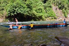 manvsnature (melintangnyukang) Tags: longboat iban katibas expedition hutan