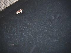 Stroll (Jon-Fū, the写真machine) Tags: 猫 cat cats ネコ kitty kittycat kitties stray strays pussycat pussycats puddytat neko にゃんこ nyanko feline felines animal animals 動物 生き物 fauna jonfu 2017 olympus omd em5markii em5ii em5mkii em5mk2 em5mark2 オリンパス mirrorless mirrorlesscamera microfourthirds micro43 m43 mft μft マイクロフォーサーズ ミラーレスカメラ ミラーレス一眼カメラ ミラーレス機 ミラーレス一眼 snapseed japan 日本 nihon nippon ジャパン ジパング japón जापान japão xapón asia アジア asian fareast orient oriental aichi 愛知 愛知県 chubu chuubu 中部 中部地方 nagoya 名古屋